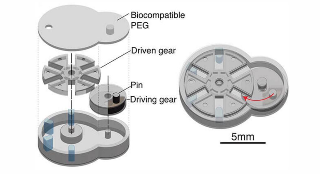 Biobot meccanismo croce di Ginevra