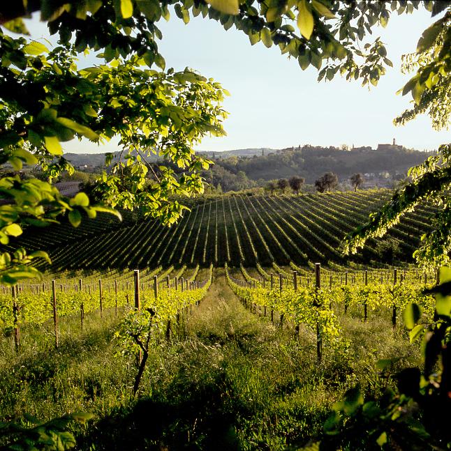 Colline Collalbrigo-Primavera 2004