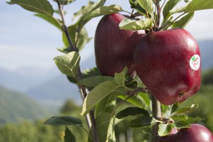 Valtellina Apples