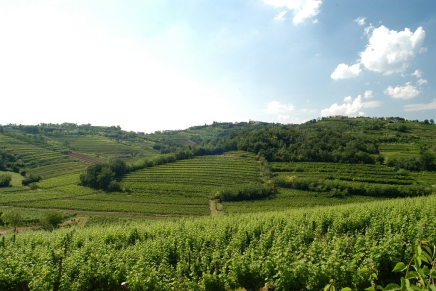 The Collio Bianco: the identity of a land