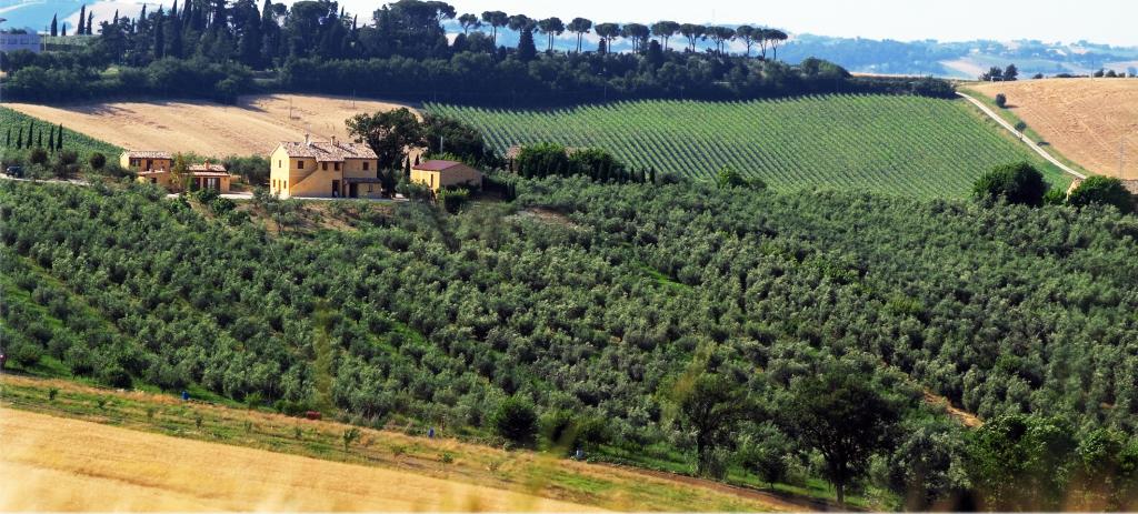 oliveto e Agriturismo Gabrielloni