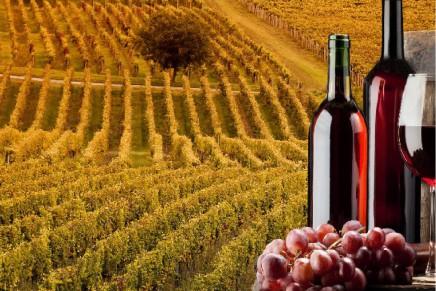 Tradition meets innovation: so Italian wine improves