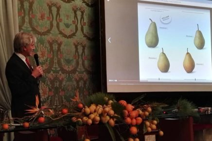 The new regulations of the PGI Pear of Emilia Romagna being approved in Brussels