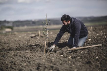 Planeta begins 2017 by planting other 13,000 olive trees