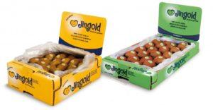 Jingold-Compo_pubblicitaria-solo-giallo-e-verde-1024x532