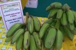 Banane italiane: già disponibili nei mercati di Coldiretti