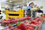 Brio: operativa la piattaforma di confezionamento per il biologico a Pomezia